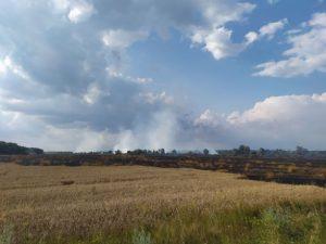 В Черниговской области горит пшеничное поле: огонь локализовали на площади 55 га
