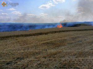 В Николаевской области загорелось пшеничное поле