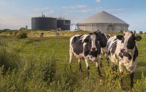 Биотопливная биржа в Украине: эксперт объяснил, почему её необходимо создать